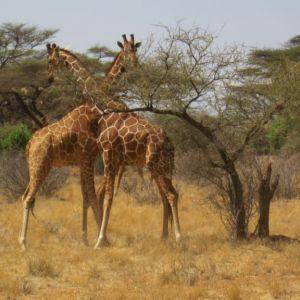 Africa_de_sud_.JPG