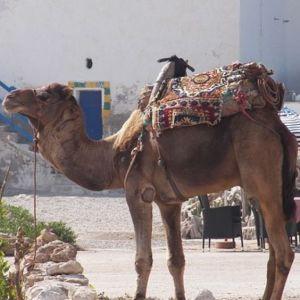revelion_tunisia.jpg