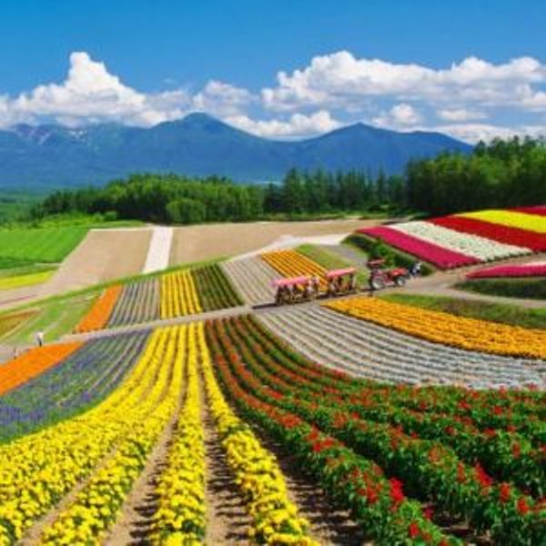 japoniainedita.jpg