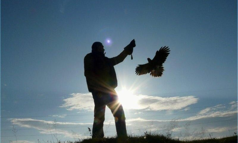 O buna idee de cadou, Initiere in manuirea pasarilor de prada in Iasi 3