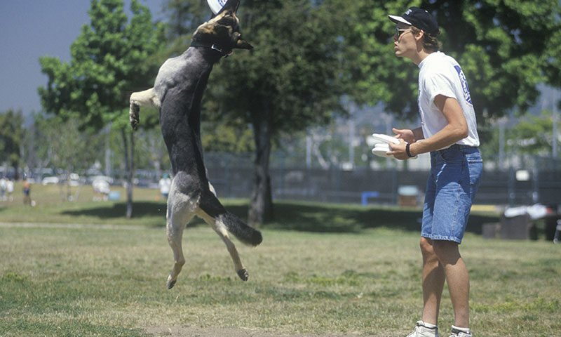 O buna idee de cadou, Initiere dresaj canin in Bucuresti 4