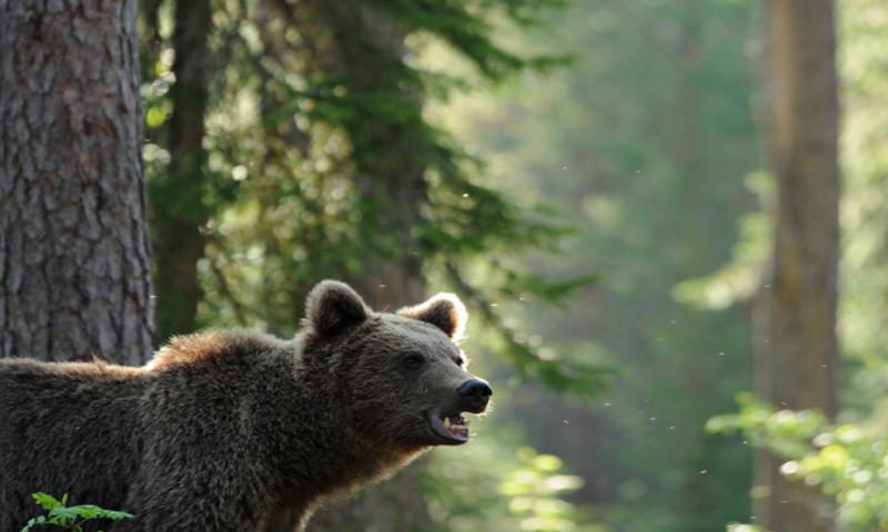 O buna idee de cadou, Bear Watching - Aventura pe Urmele Ursilor pentru 2 4