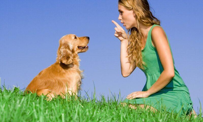 O buna idee de cadou, Initiere dresaj canin in Iasi 4